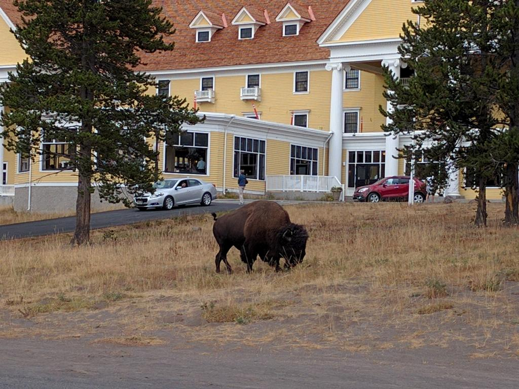 Another friend just crossing the parking lot in front of one of the lodges.