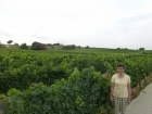 We saw miles of lush green vineyards and never saw a single person working in one!